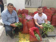 Topladıkları bitkileri satarak aylık 6 bin lira kazanıyorlar