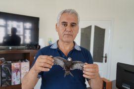 Batman'da ebabil kuşu bulundu