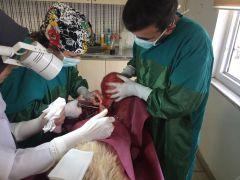 Hasta köpekten 5 kilogram tümör alındı