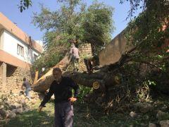 Şiddetli rüzgar, dut ağacını evin üstüne devirdi