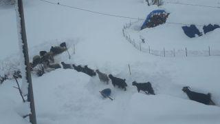 Sason'da kar yağışı hayatı olumsuz etkiledi