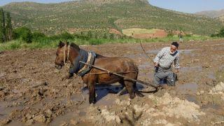 Gercüşlü çiftçiler pirinç ekimi için hazırlıklara başladı