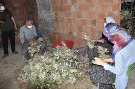 Sason'da koza hasadına başlandı