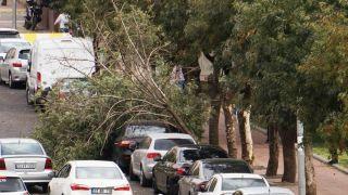 Batman'da şiddetli rüzgar nedeni ile kopan ağaç, aracın üzerine devrildi