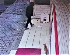 Batman'da bu kadarına da pes dedirten olay: Kedi barınağını çaldılar