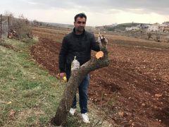 Gercüş'te meyve ağaçları aşılanmaya başlandı