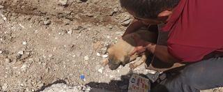 Batman'da sulama borusunda sıkışan 4 yavru köpek kurtarıldı